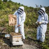 Eurostar beekeepers working on our hives in Kent
