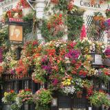 Churchill Arms Pub in London