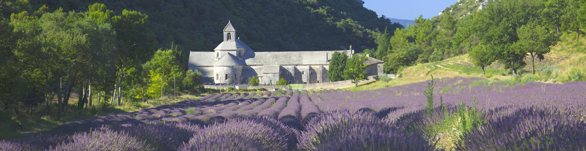 Abbey surrounded by fields of lavender