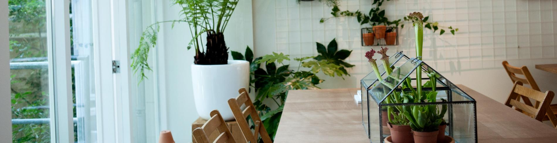 Plants in the SLA restaurant