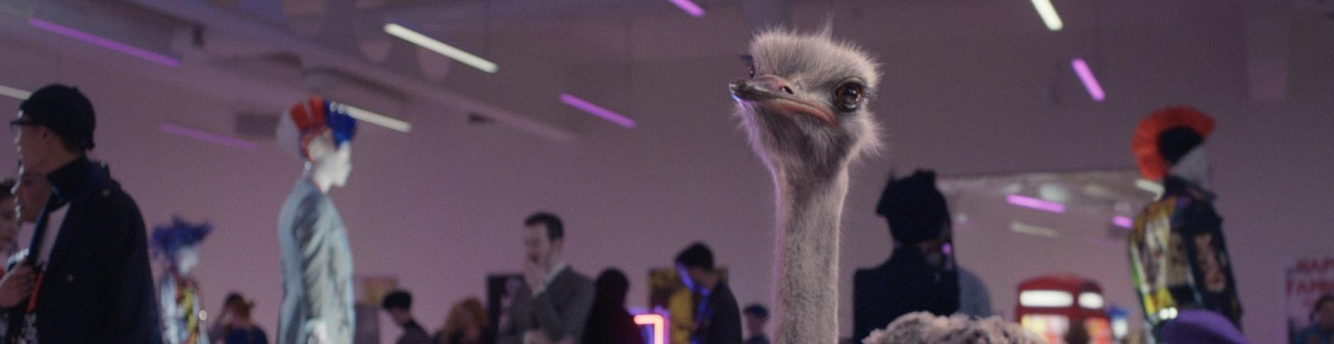 Eurostar frenct tv ad with ostrich in art gallery