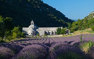 Avignon Lavender Field