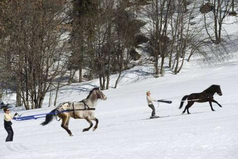 People on skis being pulled along by horses