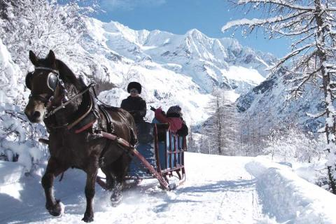 family taking a ride in a horse-drawn sled