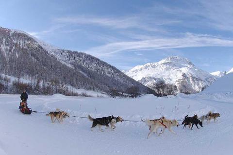 Dog sledding across the snow