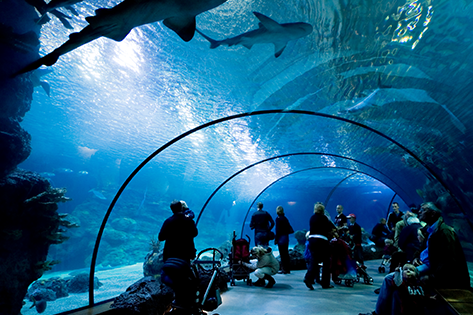 Rotterdam Zoo Oceanium