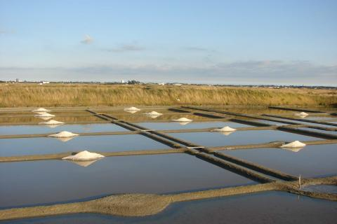View of the salt marshes at Guérande